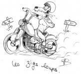 Zigs Loups